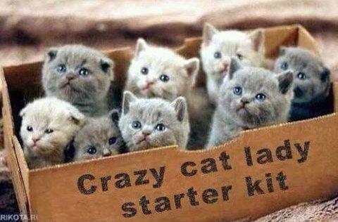 catladystarter.jpg