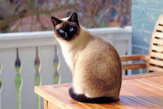 A macska rúgja meg! – Avagy tippek macskatartáshoz
